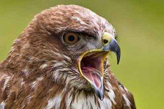 'Público' acusa a Cospedal de dejar sin veterinarios a la 'fauna amenazada'