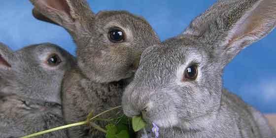 Los conejos se hacen los dueños del aeropuerto de Castellón