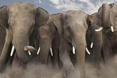 El 2011 ha sido un año horrible para los elefantes por culpa de los chinos