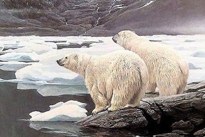 Agonía en el Ártico: Los osos polares y las morsas, en peligro