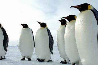Pingüinos del zoo que bombardean con caca a los visitantes