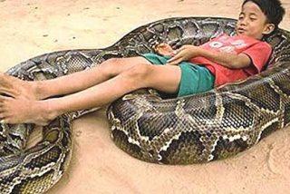 La tribu que compite con la serpiente pitón para ver quien se come a quien