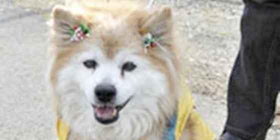 Muere en Japón, a los 25 años, el perro más longevo del mundo