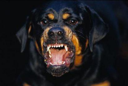 Tres perros rottweiler atacan a una pareja en una gasolinera