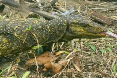 El Gran Mekong, territorio propicio para las nuevas especies