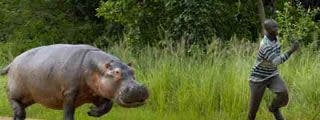 El Gobierno Zapatero dio ayudas in extremis hasta a los hipopótamos
