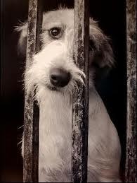El Ayuntamiento pone en marcha una campaña para mejorar el cuidado y la tenencia de mascotas