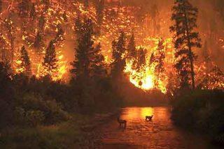 Siete muertos en Chile por incendios que el Gobierno atribuye a 'terrorismo'
