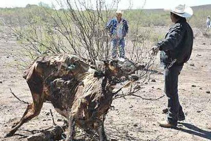 La sequía amenaza de hambruna a 2,5 millones de mexicanos
