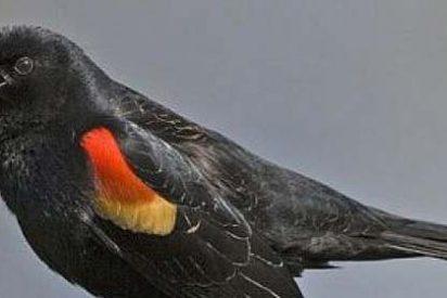 Miles de pájaros caen muertos del cielo por segundo año consecutivo