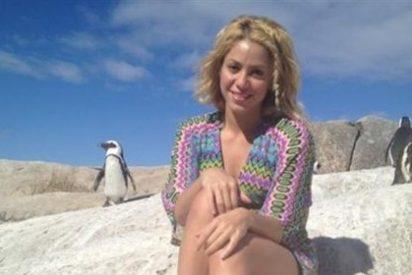 Shakira es 'atacada' por un león marino durante una excursión