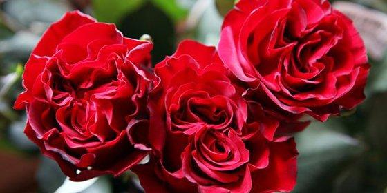 Colombia exporta 450 millones de flores para los enamorados