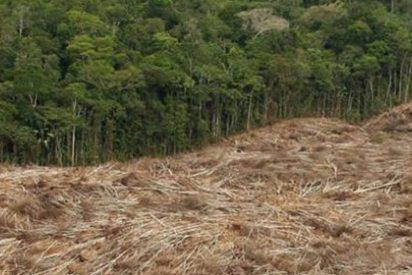 El Amazonas perdió una superficie mayor que Francia en 40 años