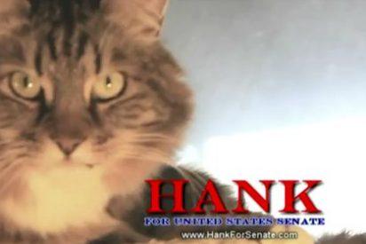 Presentan a un gato como candidato al Senado de Estados Unidos