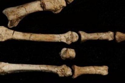 """Nuestro ancestro """"Lucy"""" vivió con otros homínidos hace millones de años"""