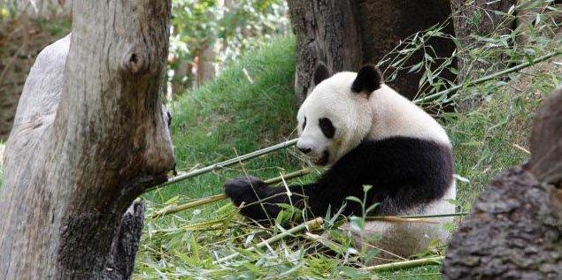 Cómo Enfrentamos la Sexta Extinción Masiva