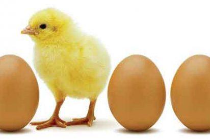 El precio de los huevos se duplica en un año por culpa de la UE