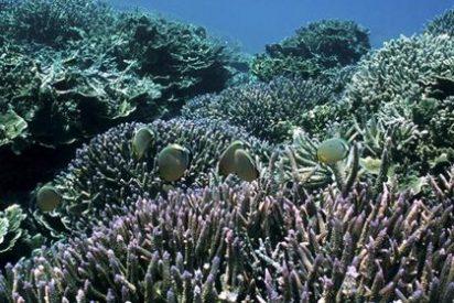 Los océanos se acidifican demasiado rápido por las emisiones de CO2