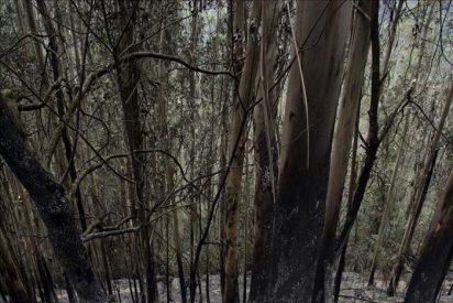 El incendio en As Fragas do Eume se mantiene controlado