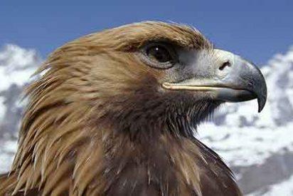 Un águila ataca a una turista británica para llevarse a su perra