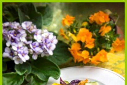 Las flores brotan en la mesa esa primavera