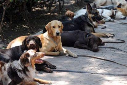 """Trabajar acompañados de perros """"reduce el estrés"""" de los empleados"""