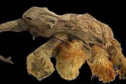 El mamut rojizo que huía de los leones y se comieron los hombres