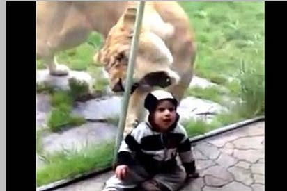 El bebé impasible que no teme a los leones triunfa en Internet