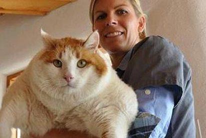 La obesidad mata al gato Meow, el 'más gordo del mundo'