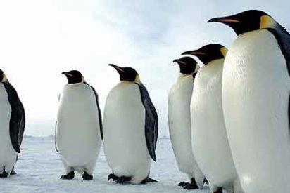 Dos borrachos amanecen con un pingüino y no se acuerdan de nada