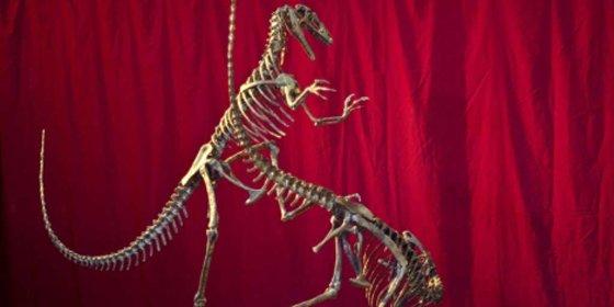 Hallan una nueva especie de dinosaurio carnívoro en Argentina