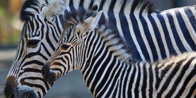 'Zoobicuidad': Cómo aprender del estado de la salud de los animales