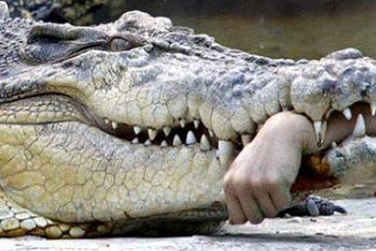 Un cocodrilo arranca la mano al capitán de un barco turístico