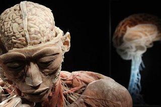 Las 20 partes del cuerpo humano que no nos sirven para nada