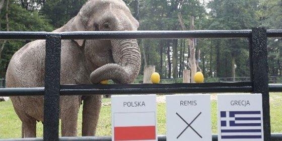 Los herederos del pulpo Paul para la Eurocopa 2012