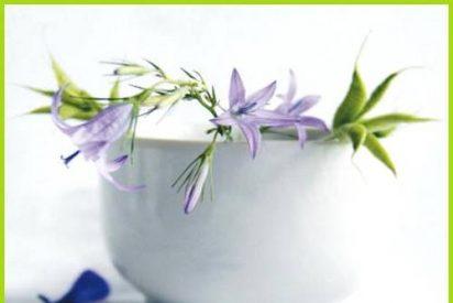 Remedios medicinales de corte natural