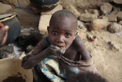 Los niños del Sahel comen langostas para sobrevivir