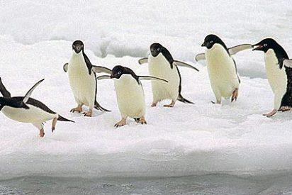 ¿Sabías que los pingüinos tienen costumbres sexuales depravadas?
