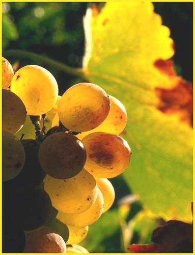 Las novedades del Vino español se presentarán en China y Hong Kong