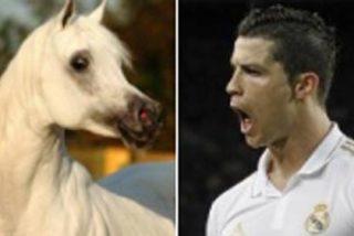 El caballo del jeque del Málaga que cuesta más que Cristiano Ronaldo