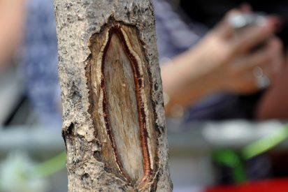 """Multitudes peregrinan al árbol """"milagroso"""" de la Virgen María en Nueva Jersey"""