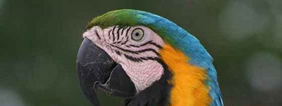 Predicadores como papagayos