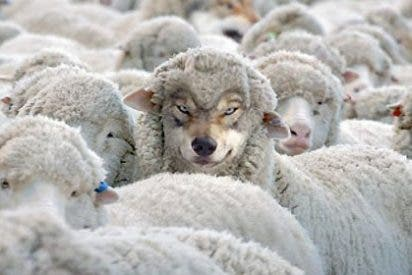 La propia oveja podrá avisar por SMS al pastor de que viene el lobo