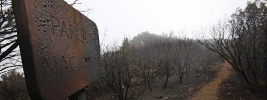 Un siglo tardará en recuperarse del fuego parte del Parque de Garajonay de La Gomera