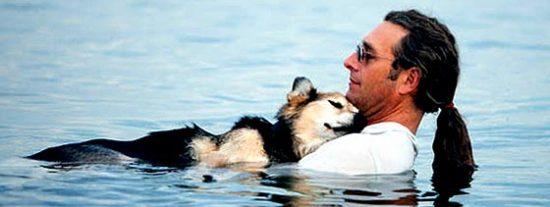 El mejor amigo... del perro
