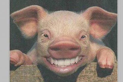 Un granjero muere devorado por sus propios cerdos cuando les daba de comer