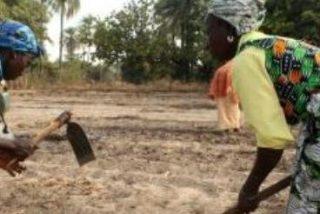 La alimentación es un derecho humano básico al que no acceden casi 850 millones de personas