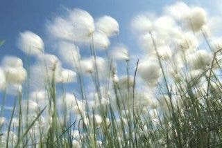 Para que vuelva a florecer la primavera del Vaticano II