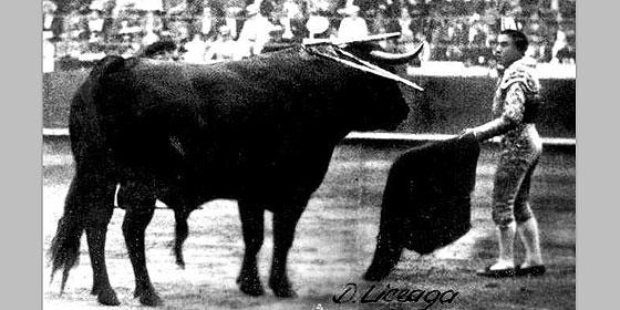 El toro bravo más grande que se ha lidiado en la historia de las corridas