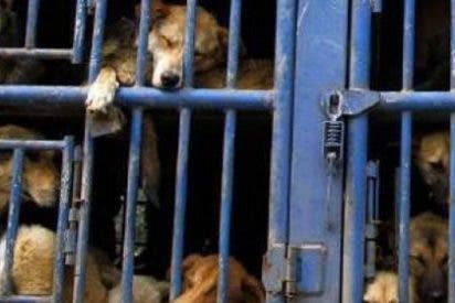 El Ayuntamiento de Santa Eulària ha rescatado este año a 385 animales perdidos